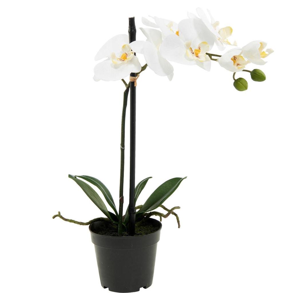 FLORISTA Orchideje 39cm - krémová