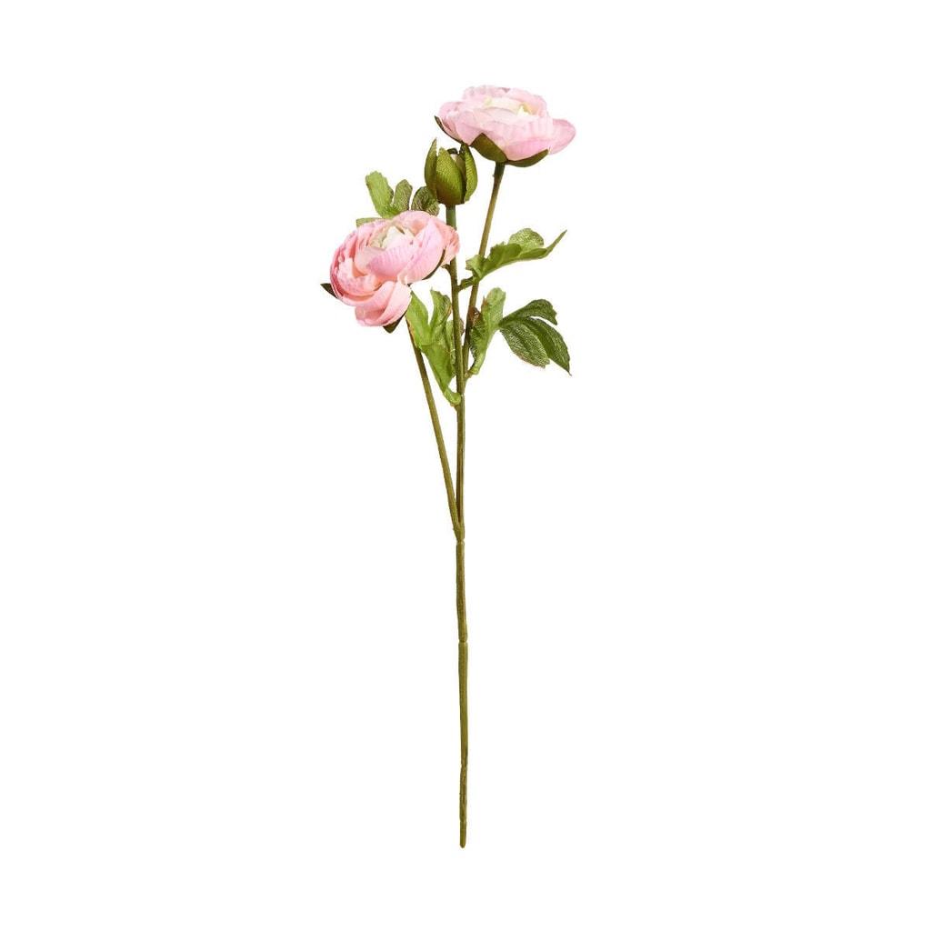 FLORISTA Pryskyřník malý 30 cm - sv. růžová
