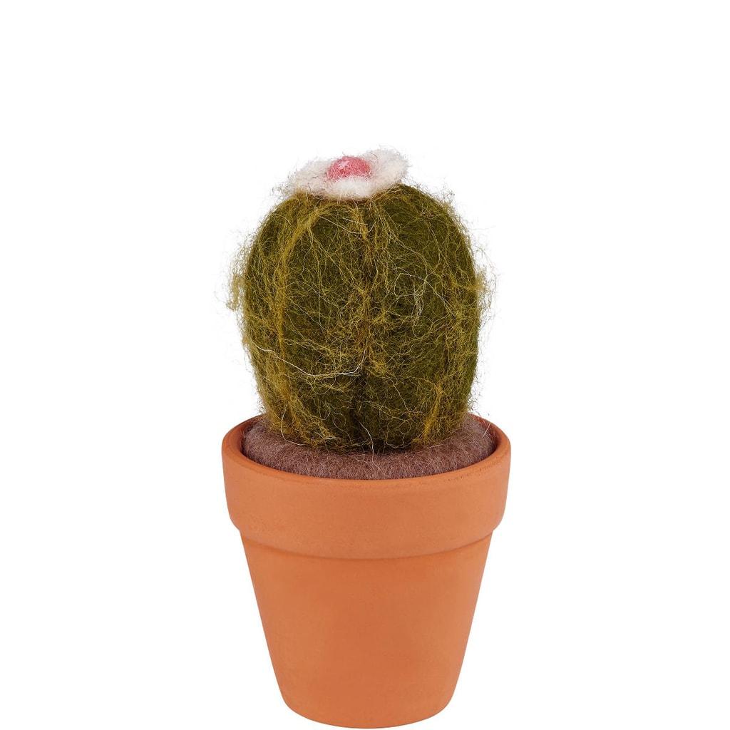 MEXICO Kaktus kulatý