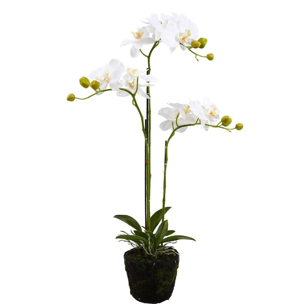 FLORISTA Orchideje 75 cm - krémová