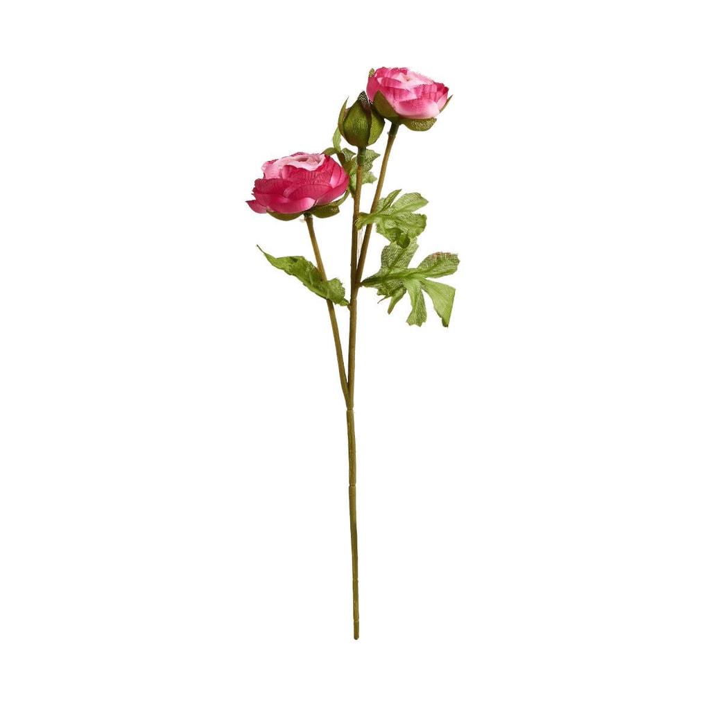 FLORISTA Pryskyřník malý 30 cm - růžová