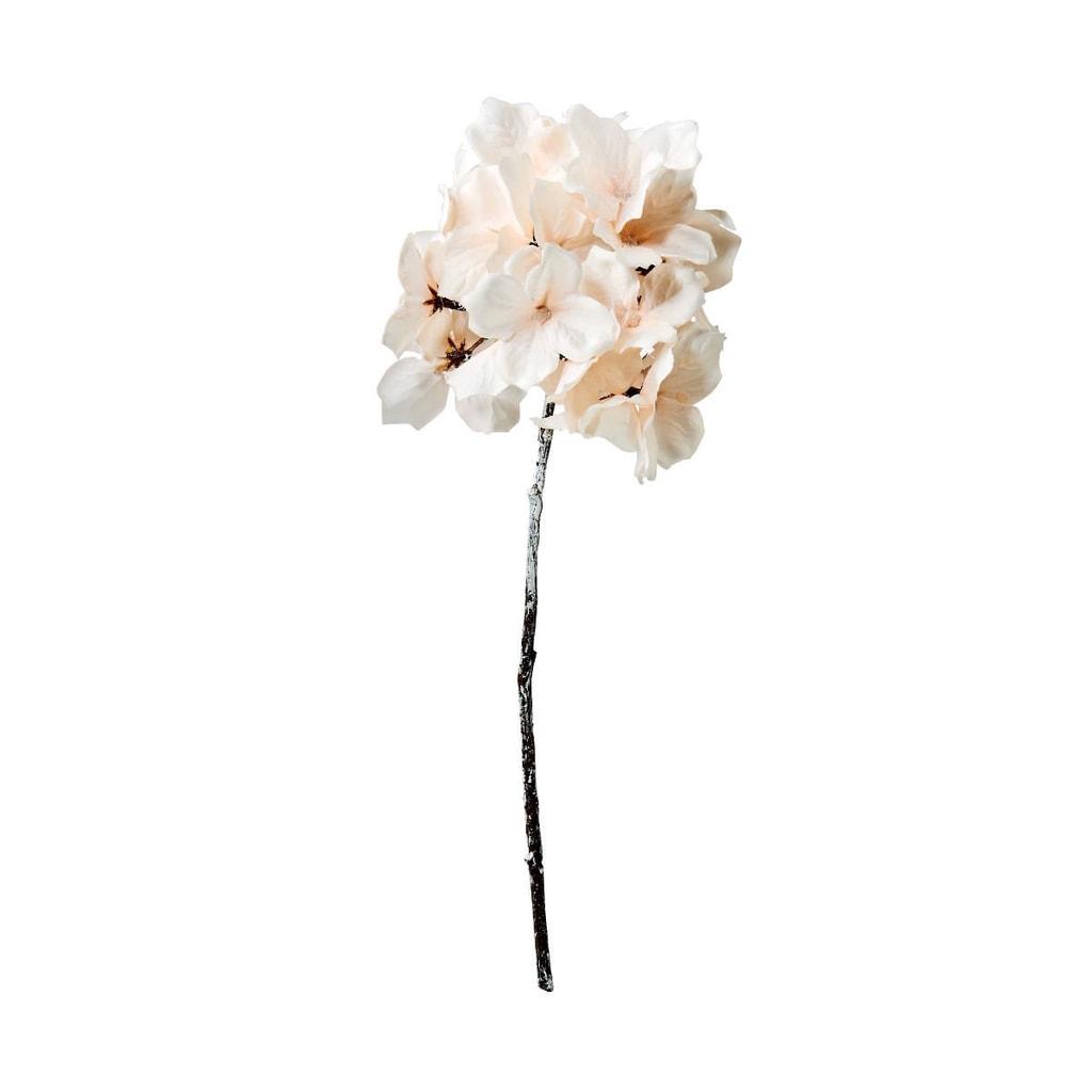WINTERGREEN Hortensie omrzlá 28 cm - krémová