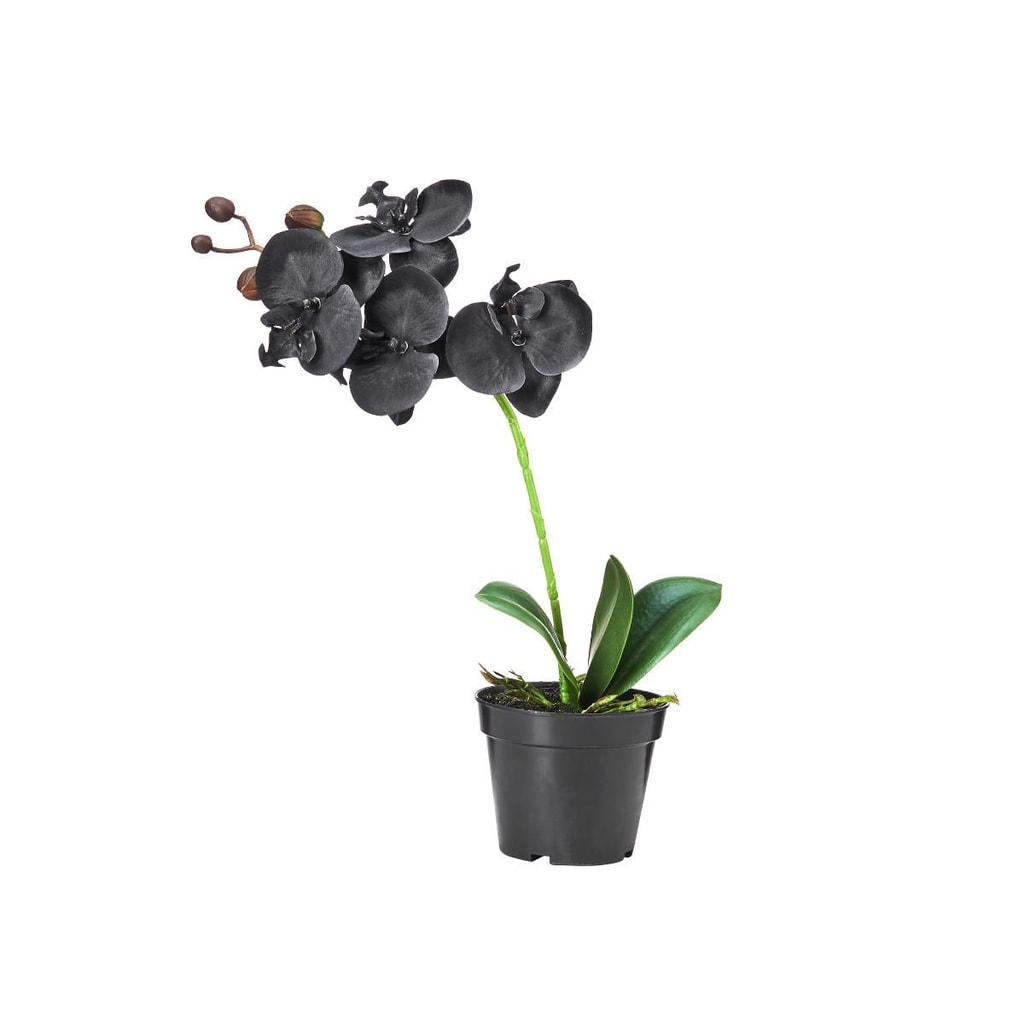 FLORISTA Orchidej v květináči 35 cm