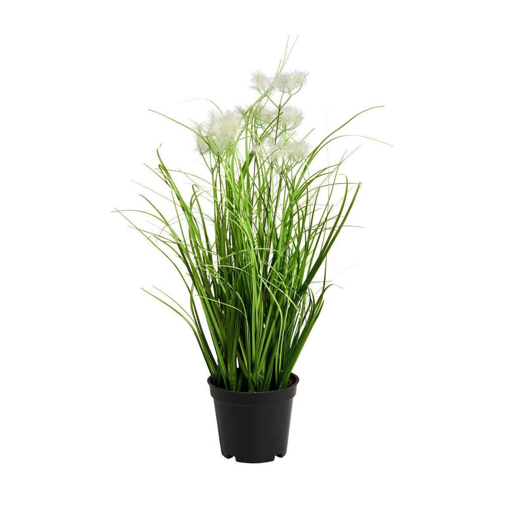 FLORISTA Svazek trávy v květináči 8 cm