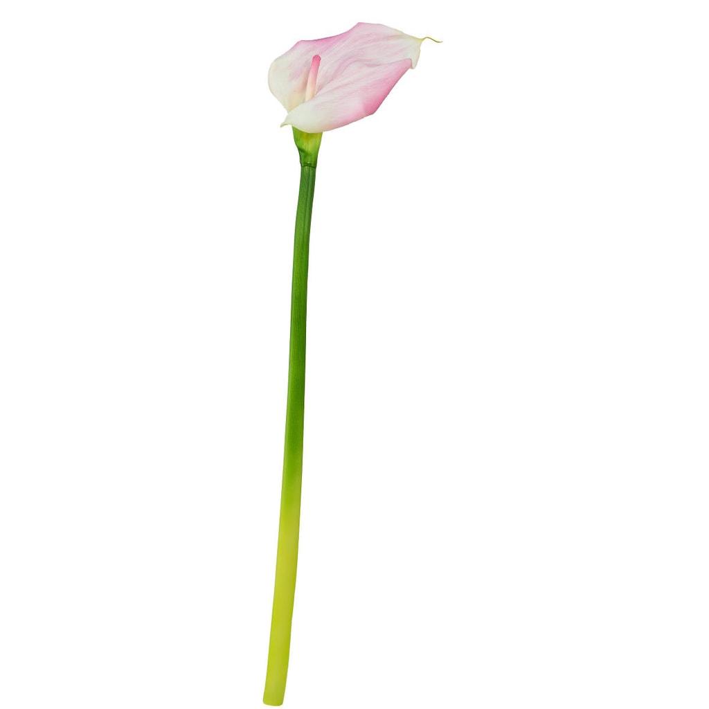 FLORISTA Kala, 55 cm - fialová