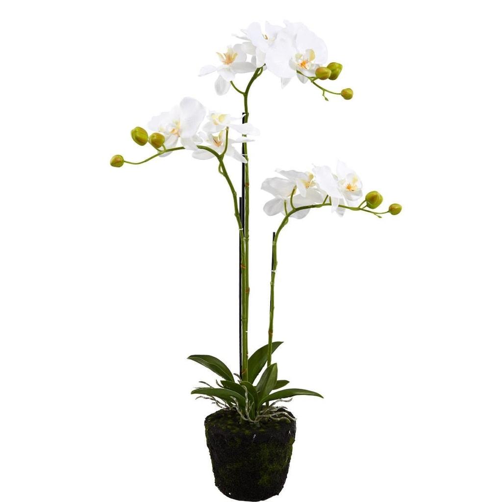 FLORISTA Orchidej v květináči 75 cm - krémová