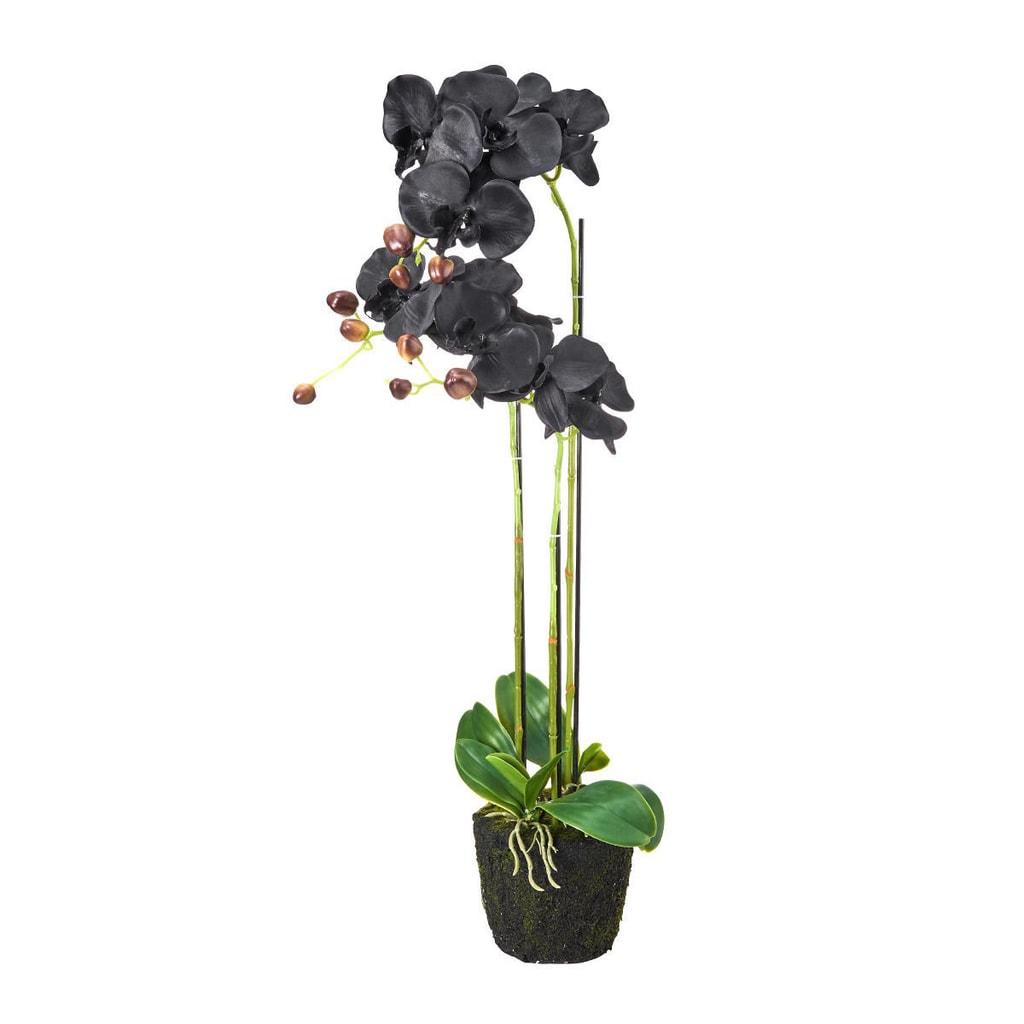 FLORISTA Orchidej v květináči 75 cm